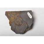 Thumbnail image for Trilobite