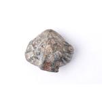 Thumbnail image for Brachiopod