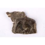 Thumbnail image for Brachiopod and Bryozoan