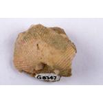 Thumbnail image for Crinoid