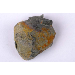 Thumbnail image for Brachiopod, Bryozoan