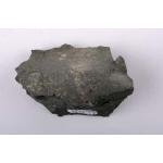Thumbnail image for Brachiopod and Crinoid
