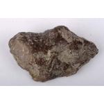 Thumbnail image for Stromatoporid