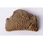 Thumbnail image for Bryozoan