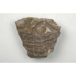 Thumbnail image for Stromatolite