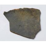 Thumbnail image for Graptolite