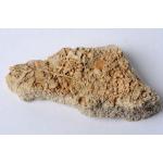 Thumbnail image for Echinoid