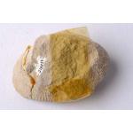 Thumbnail image for Sponge