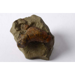 Thumbnail image for Trace fossil