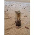 Thumbnail image for Belhaven Bay
