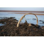 Thumbnail image for Unknown: Aberlady Bay, Firth Of Forth