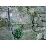 Thumbnail image for Monkton Gardens, Old Craighall