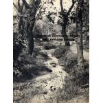 Thumbnail image for Boundary Brook between Oldbury and Smethwick