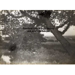 Thumbnail image for Bristnall Hall Farm, Warley: the duck pond