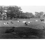 Thumbnail image for Warley Hall Farm, Pottery Road, Warley