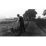 Thumbnail image for Lea House Farm, Causeway Green, Oldbury: inspection of wheat