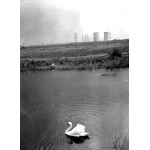 Thumbnail image for Pond by Ladymoor School
