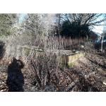 Thumbnail image for Pentland Grove, Lasswade