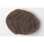 Thumbnail image for Plant - Pteridosperm