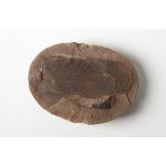 Thumbnail image for Plant