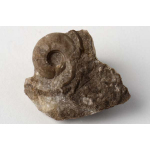 Thumbnail image for Gastropod