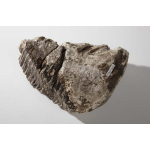 Thumbnail image for Mammoth Tooth