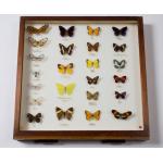 Thumbnail image for Natural History Specimen